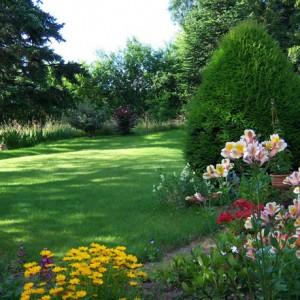 cheneau-suivi-du-jardinIMG_4638