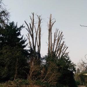 Lagage d 39 un groupe de tilleuls dans l 39 essonne lagage for Entretien jardin essonne