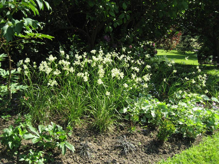 Jardinier montfort l amaury for Entretien jardin 40