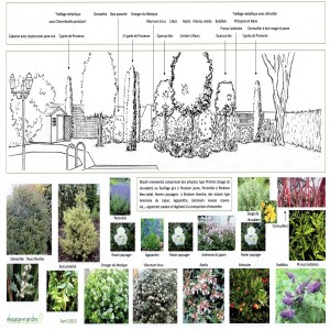 Croquis écran végétal