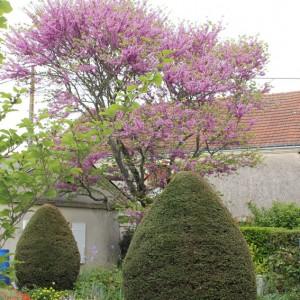 cheneau-suivi-du-jardinIMG_4646